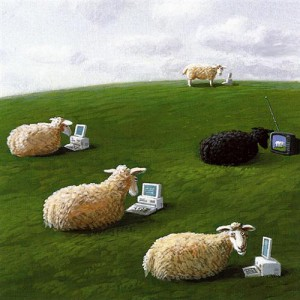 sheepwith-lap-tops.jpg!Blog